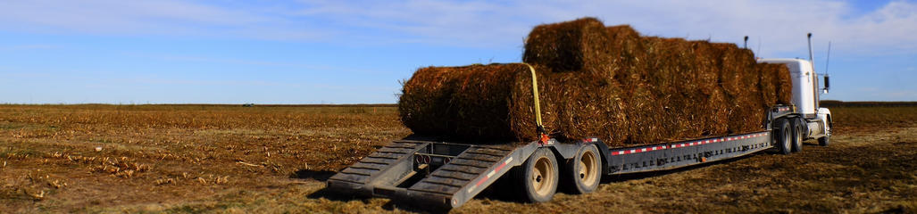 Biosolids fertilized willows are harvested and bailed for market.