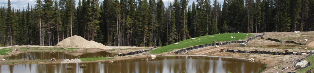SYLVIS created an artificial wetland for the purpose of leachate treatment.