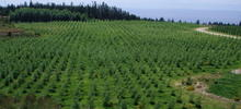 For over twenty years, SYLVIS has designed and implemented projects that utilize biosolids to fertilize woody biomass crops including hybrid poplar and short-rotation coppice willow.